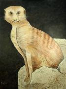 Monty Meerkat Art Greeting Card by NC Artist Scott Plaster